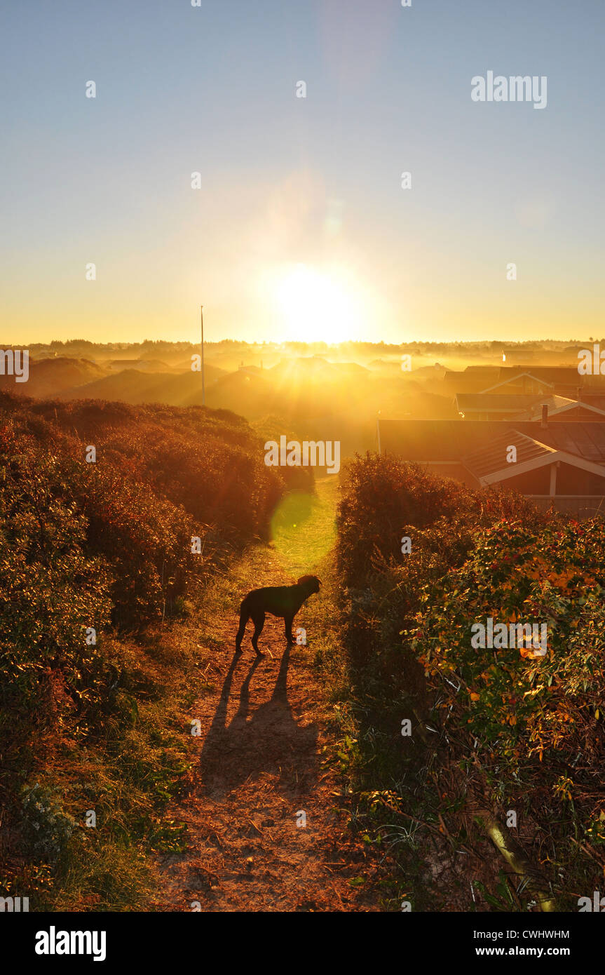Sonnenaufgang, morgen-Stimmung Stockfoto