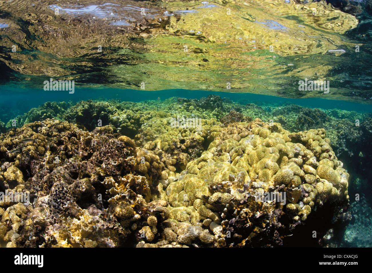 Korallenriff an der Oberfläche des Ozeans in Honduras. Stockbild