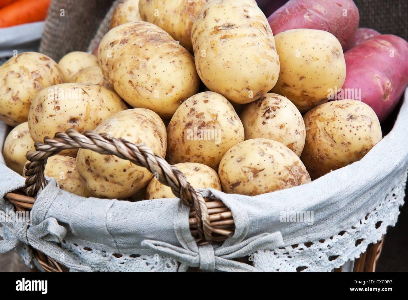 Frische neue Kartoffeln im Korb Stockbild