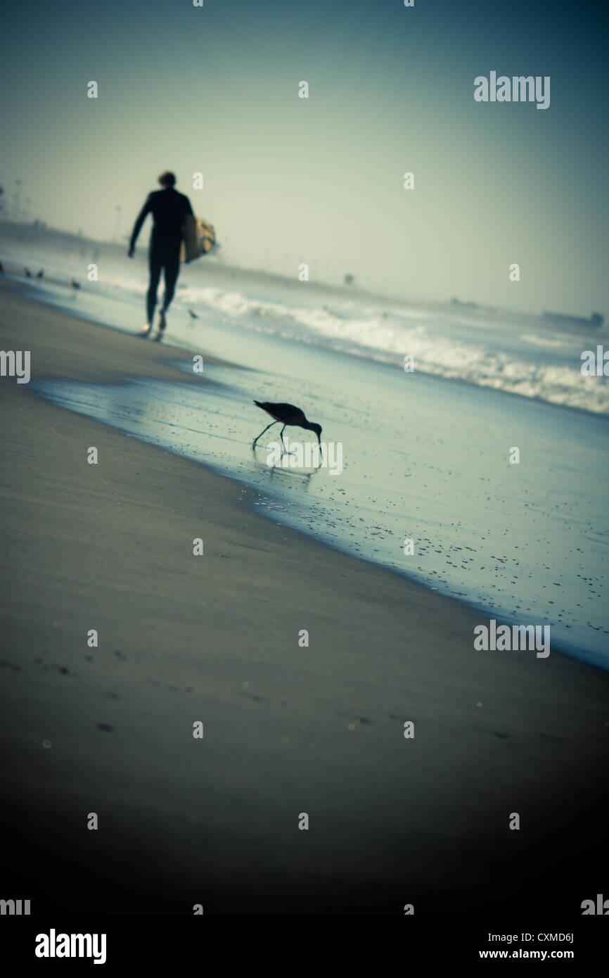Einsamer Surfer zu Fuß entlang der Küste mit einem Vogel im Vordergrund Stockbild
