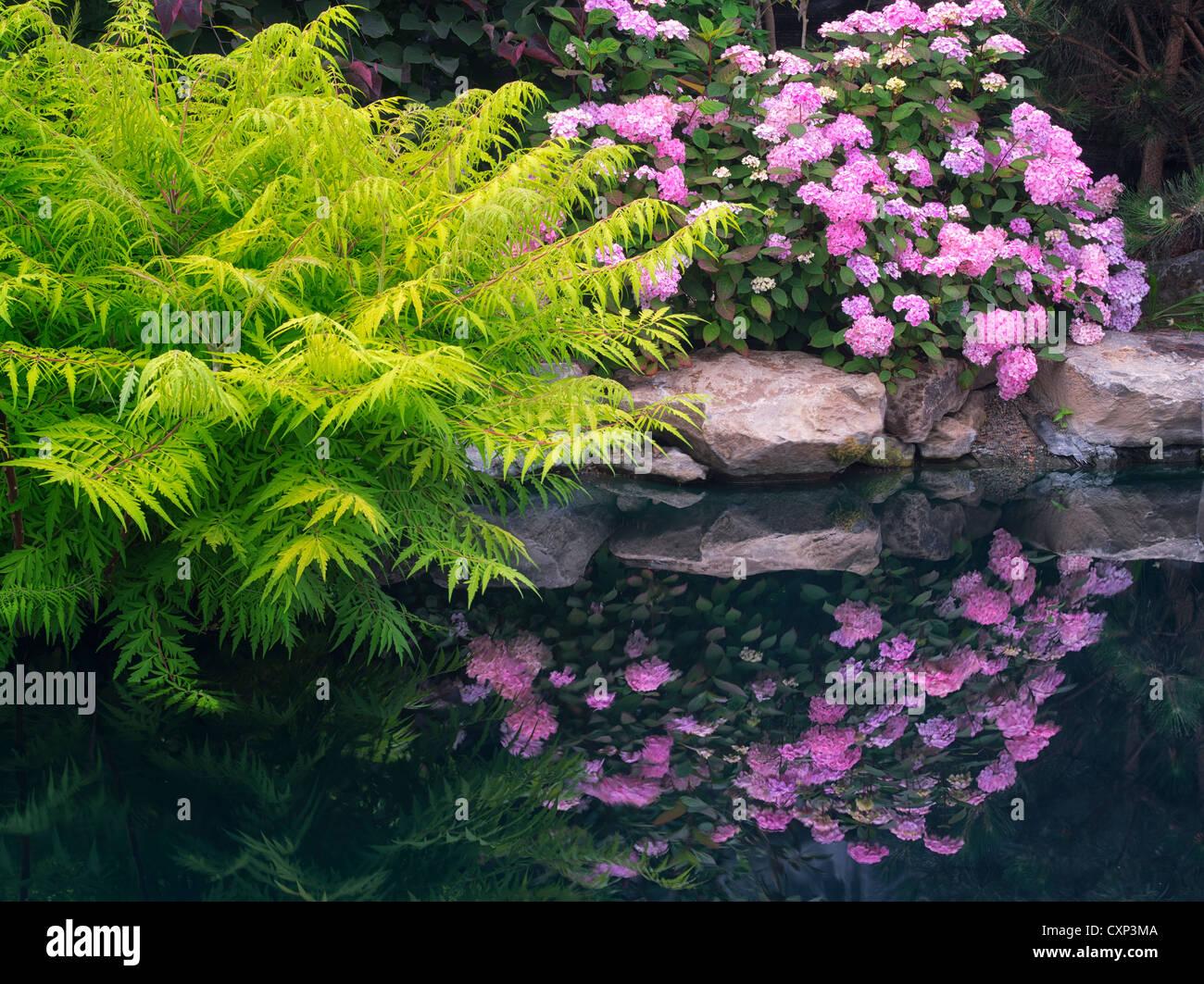 Hydrandia Spiegelbild im Teich Hughes Wassergärten, Oregon Stockbild