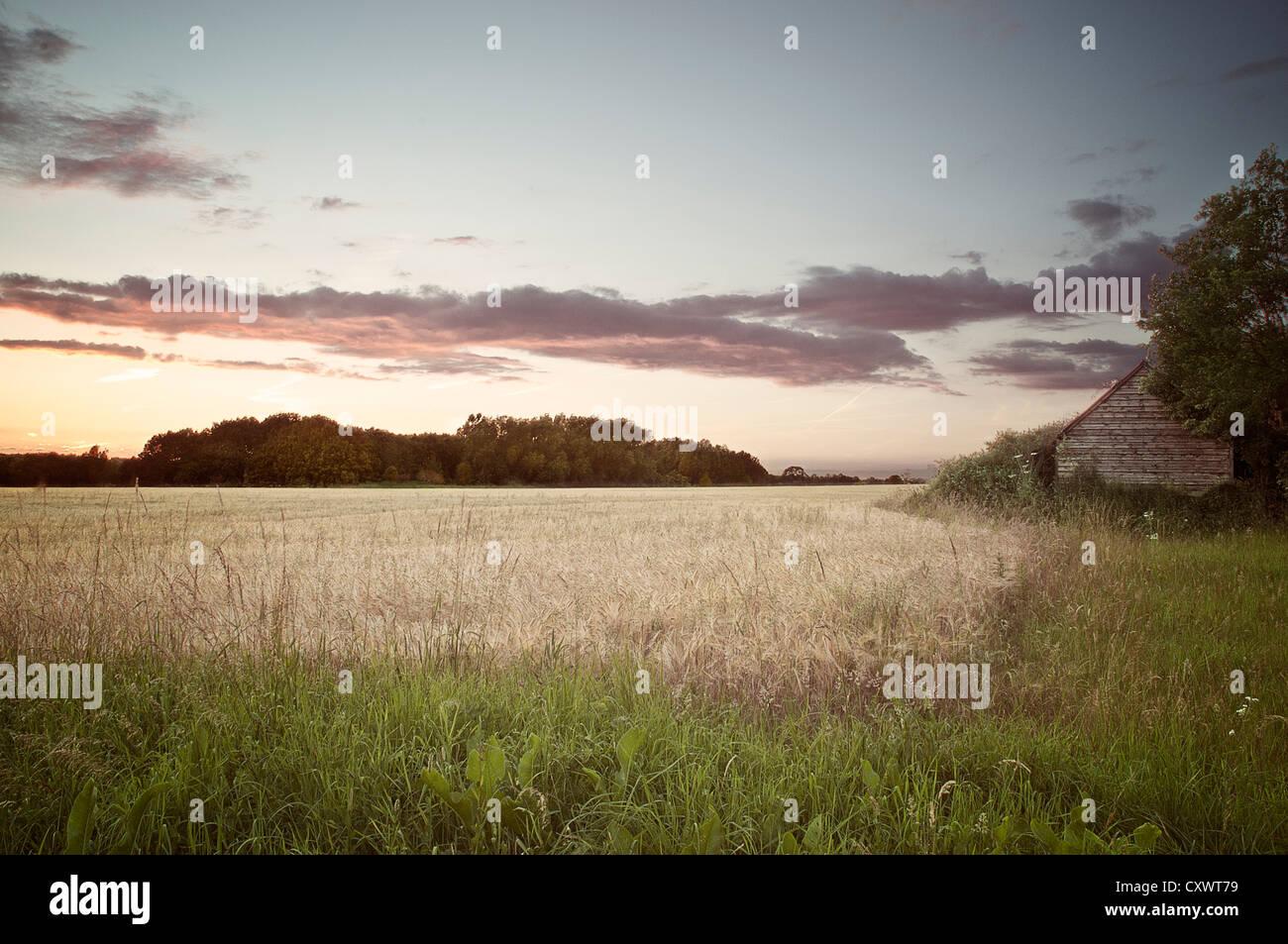Getrocknete Grass im ländlichen Bereich Stockbild