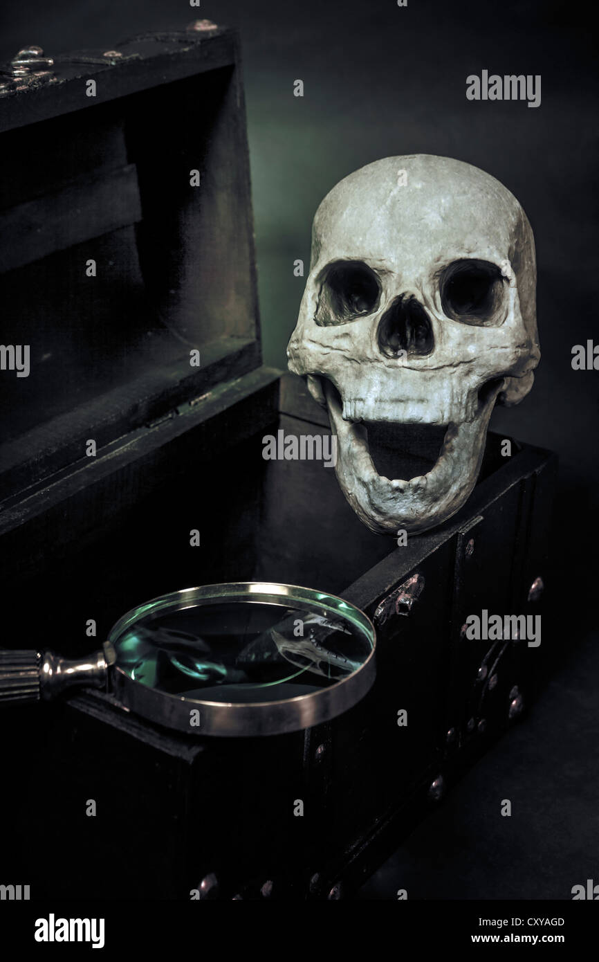 ein Schädel in einer Truhe Stockbild