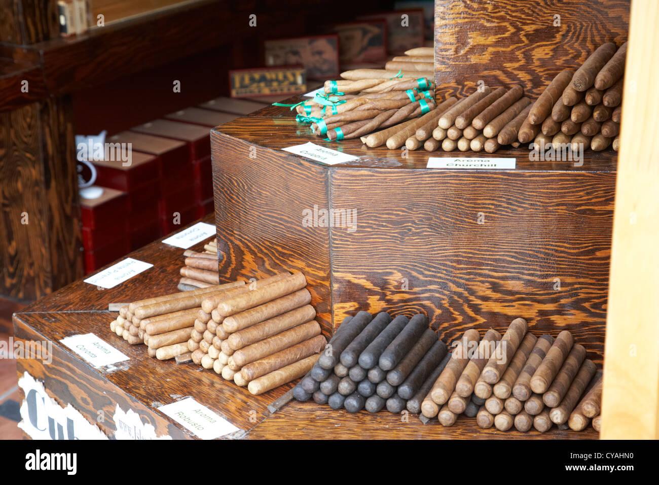 kubanischen Stil Zigarren auf Verkauf in einem Geschäft in Key West Florida usa Stockbild