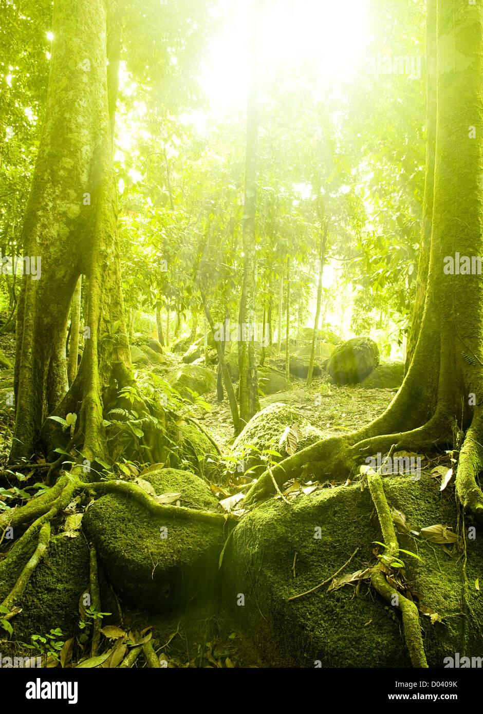 Grünen Wald mit Lichtstrahl Stockfoto
