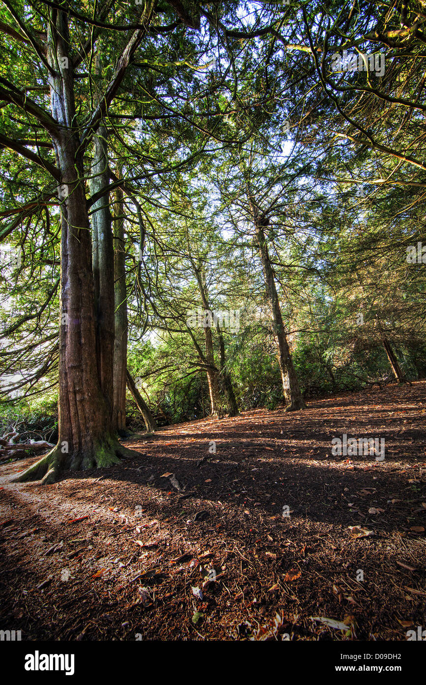 Wald-Farben Stockbild