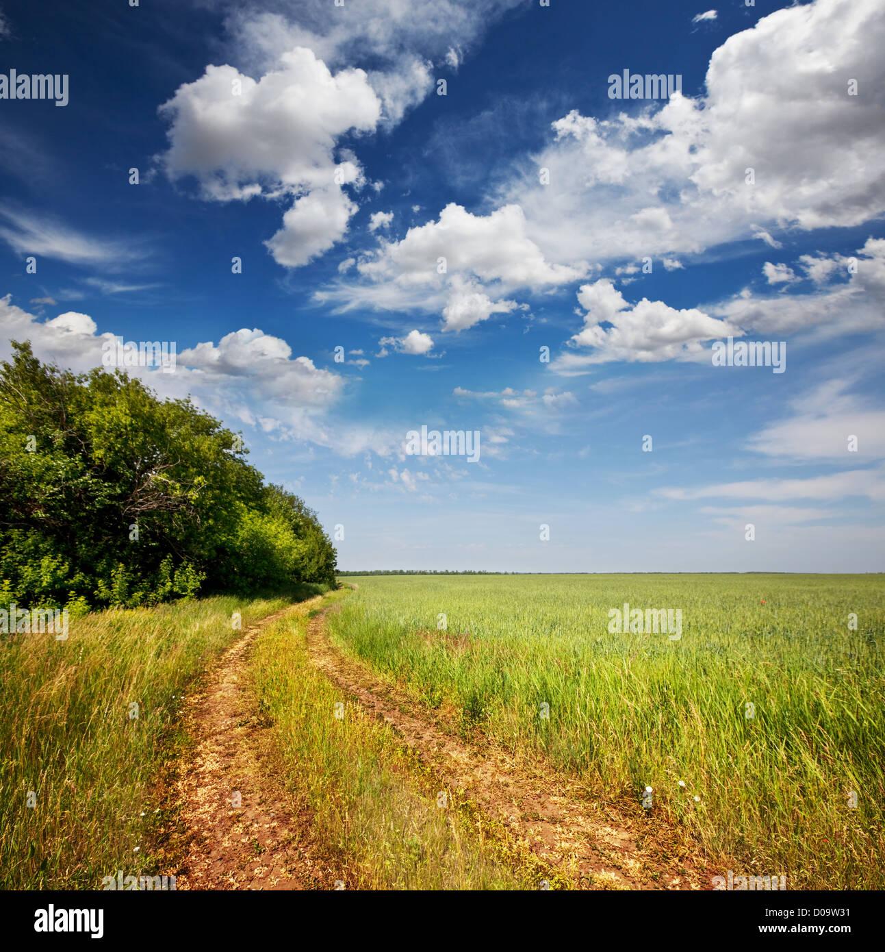 Straße im Feld, Wiesen Stockbild