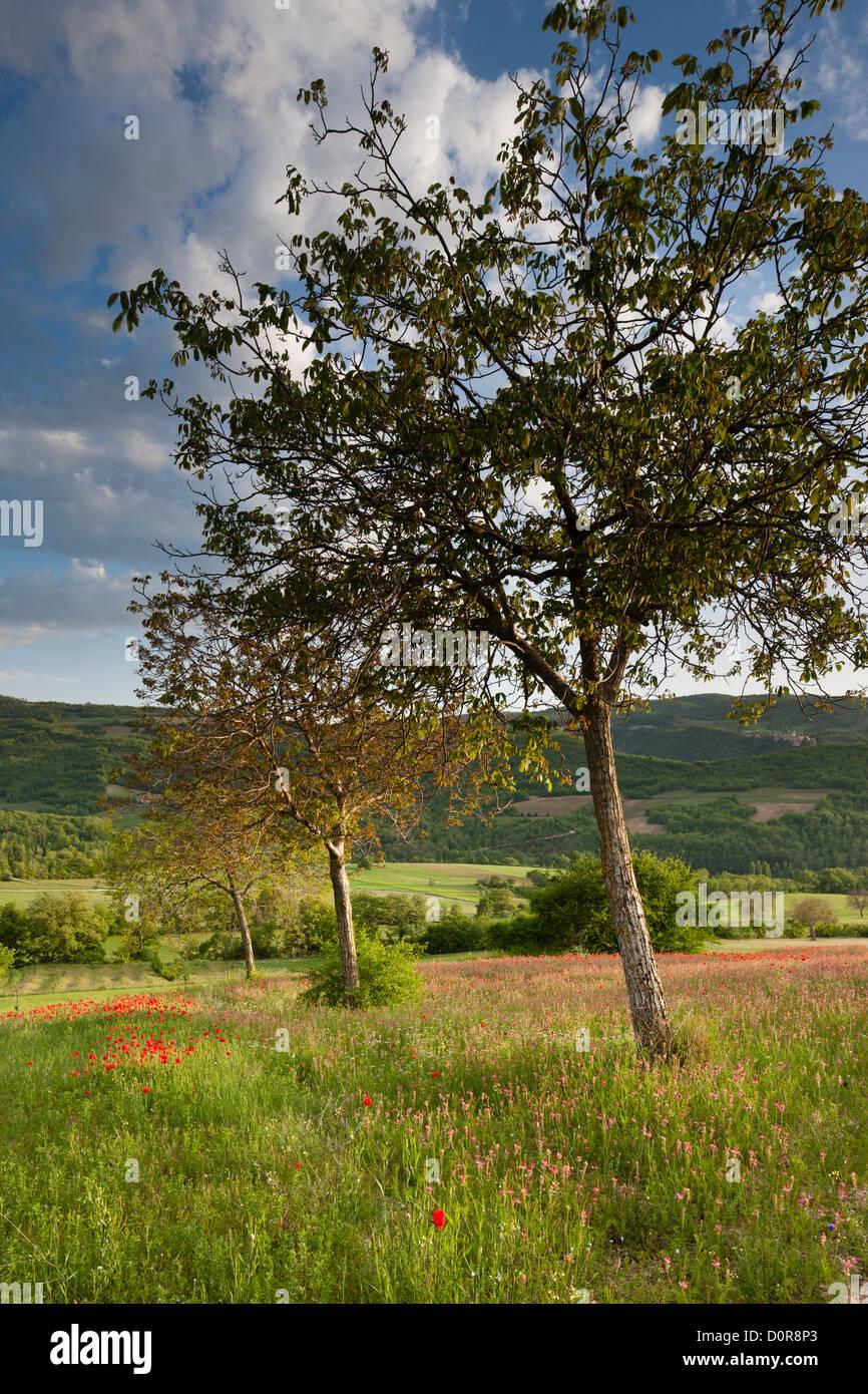 die Valnerina in der Nähe von Campi, Nationalpark Monti Sibillini, Umbrien, Italien Stockbild