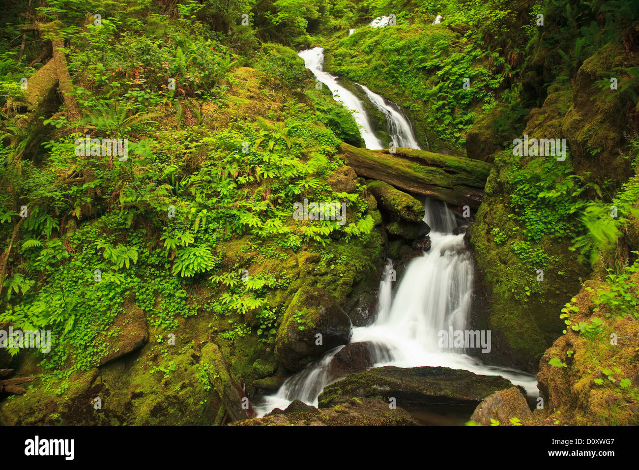 Saisonale Bach, Graves Creek Gegend, Olympic Nationalpark, Washington, USA Stockbild