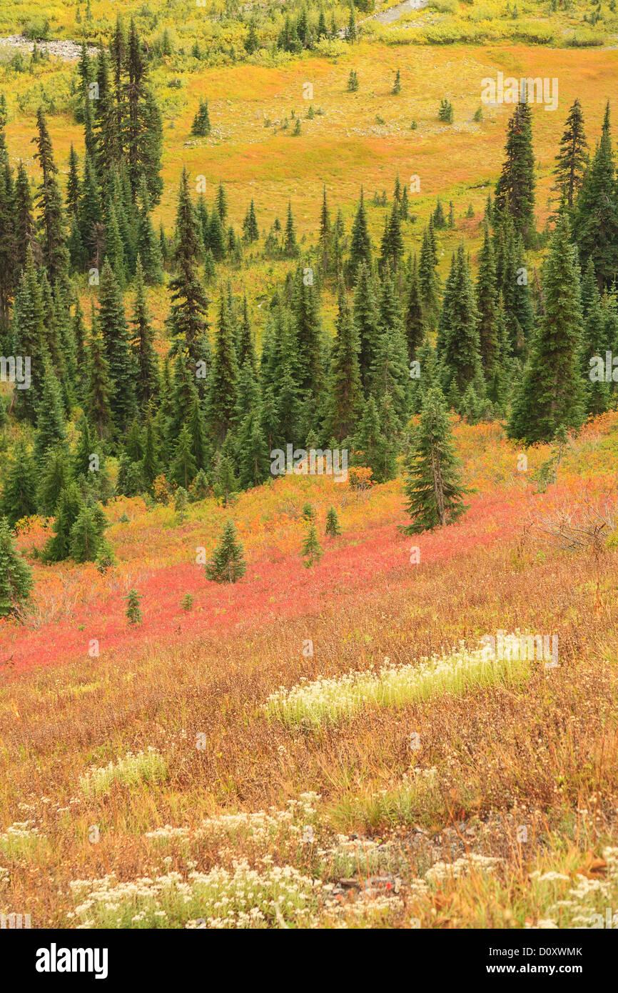 Farben des Herbstes in der alpinen Tundra, Mount-Rainier-Nationalpark, Washington, USA Stockbild