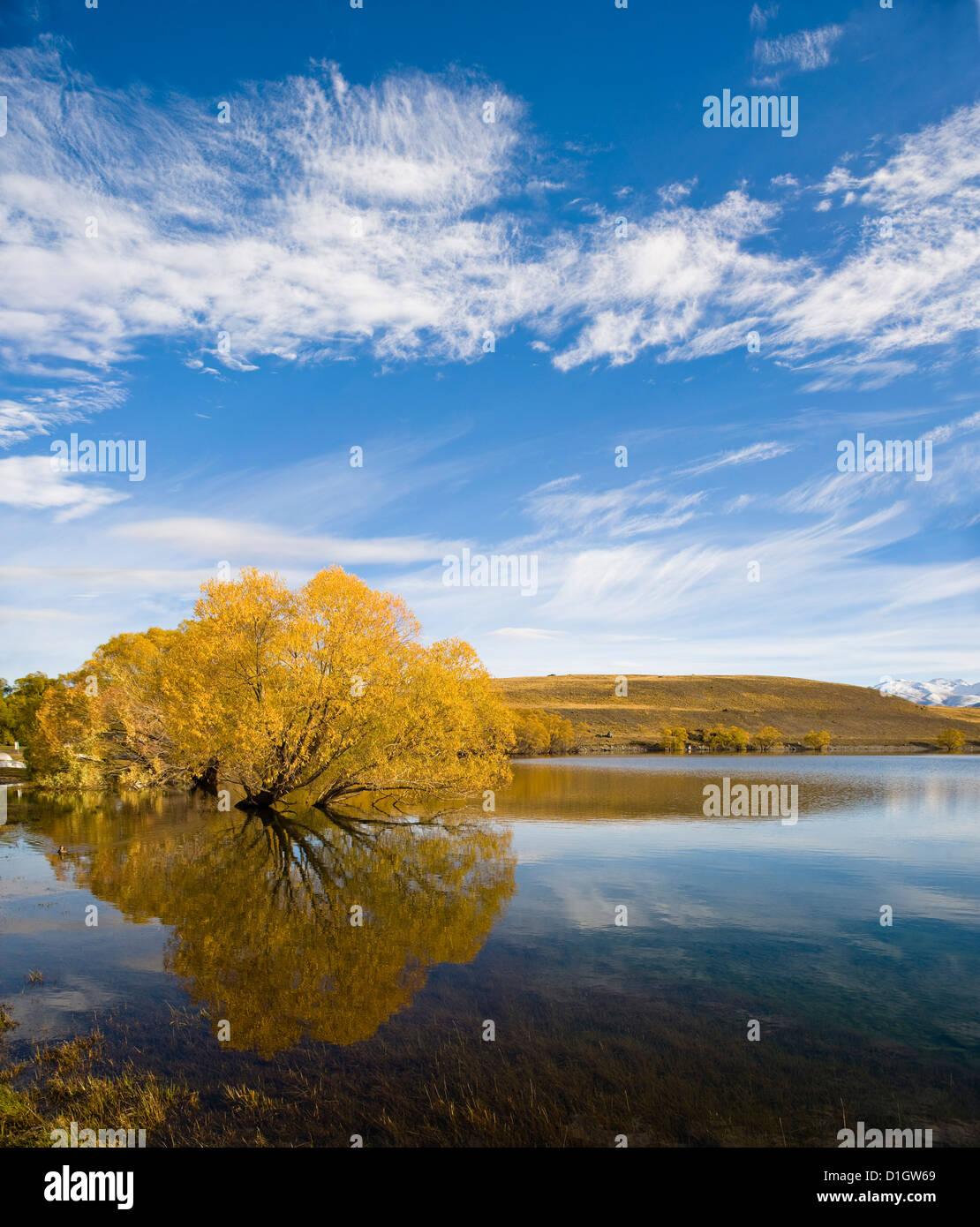 Goldenen Herbst Baum Reflexion noch morgens Wasser, Lake Alexandrina, Southern Lakes Otago Region, Südinsel, Stockbild