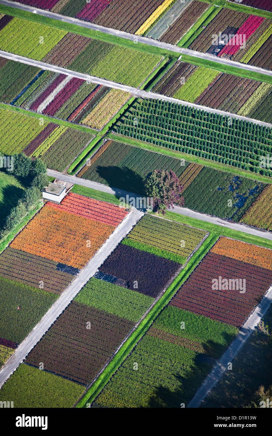 Die Niederlande, Veenendaal, Blumen und Pflanzen Baumschule. Luft. Stockbild