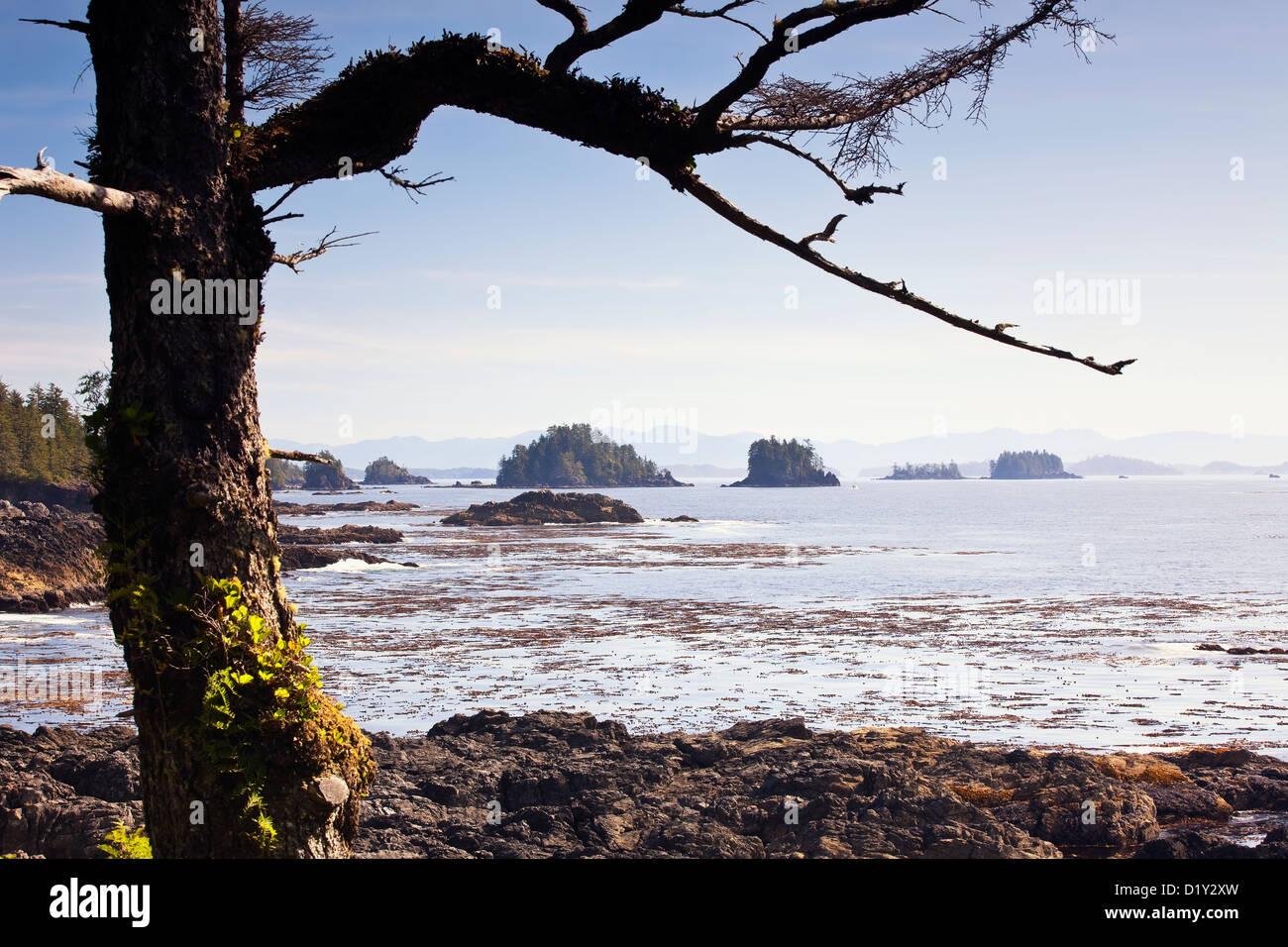 Gebrochene Inseln betrachtet aus der Wild Pacific Trail auf Vancouver Island, Ucluelet, Britisch-Kolumbien, Kanada. Stockbild