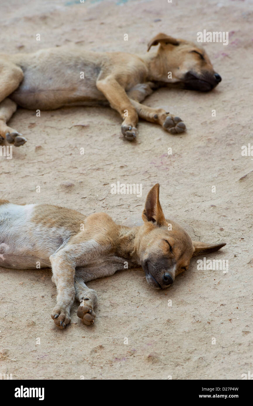 dogs with worms stockfotos dogs with worms bilder alamy. Black Bedroom Furniture Sets. Home Design Ideas