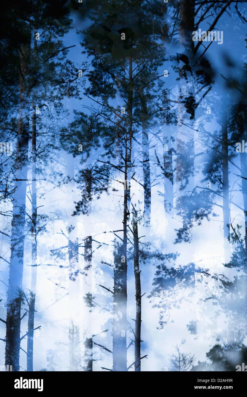 Verschwommene Sicht der Bäume im Wald Stockbild