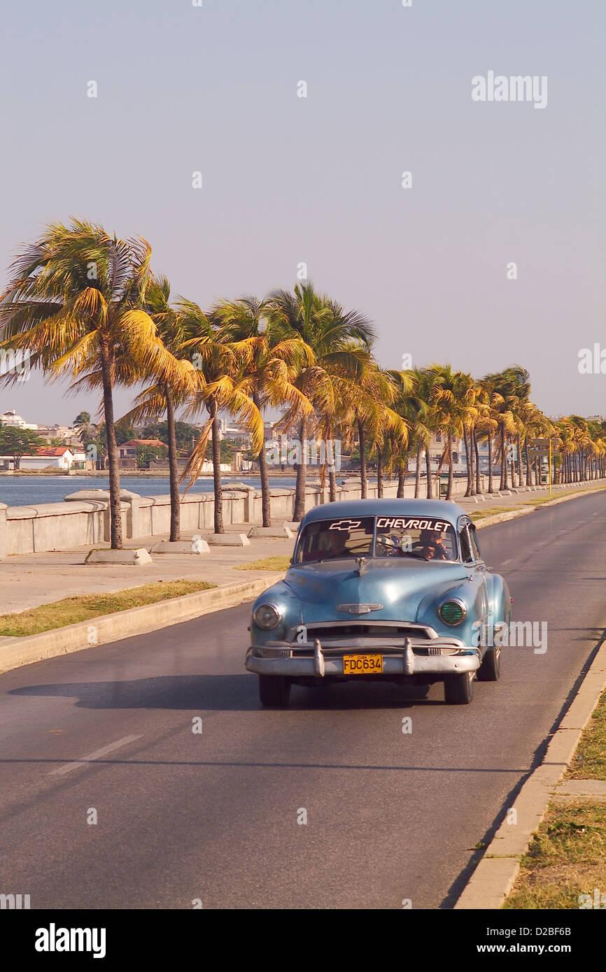 Kuba, Cien Fuergos. 50er Jahre Chevrolet auf Palmen gesäumten Straße Stockbild