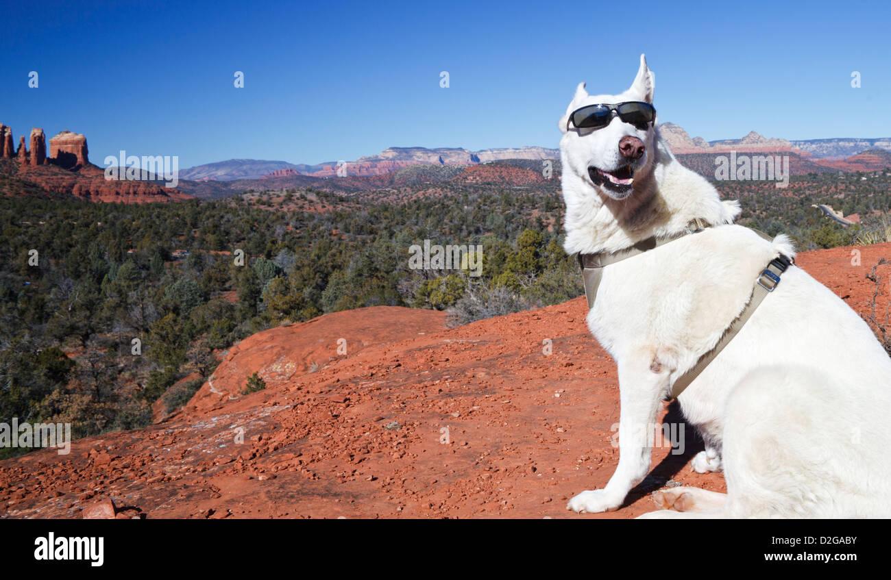 Weiße Schäferhund im View point auf Glöckchen mit Cathedral Rock in Sedona in der Ferne Stockbild