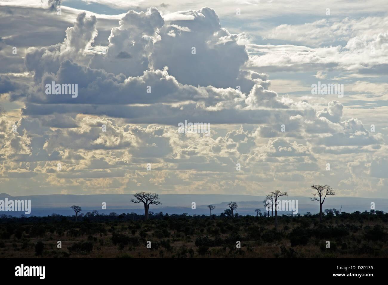 Affenbrotbäume Landschaft, Region von Ihosy, Madagaskar, Afrika Stockbild