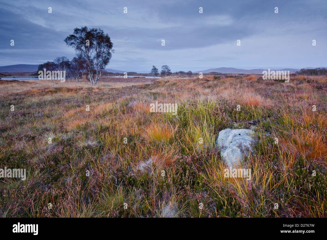 Die Fläche von Rannoch Moor, eine Site of Special Scientific Interest, Highlands, Schottland, Vereinigtes Königreich, Stockbild
