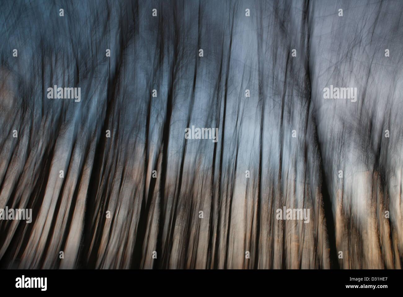 Abstrakte Bäume in der Dämmerung in Telemarkslunden in Rygge Kommune, Østfold Fylke, Norwegen. Stockbild