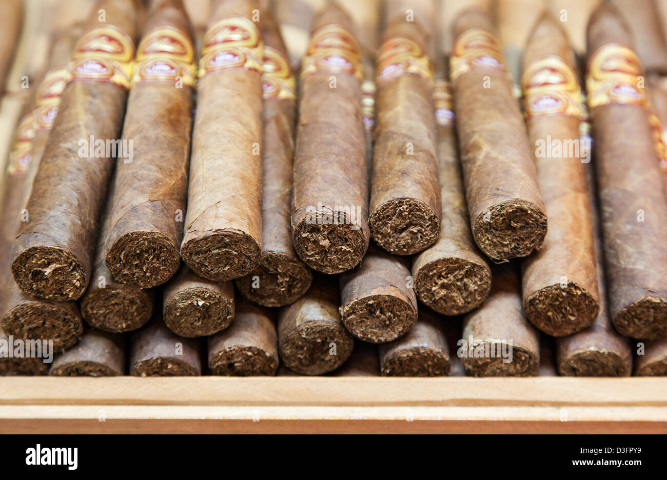 Eine Reihe von kubanischen Zigarren, Little Havana, Miami, USA Stockbild