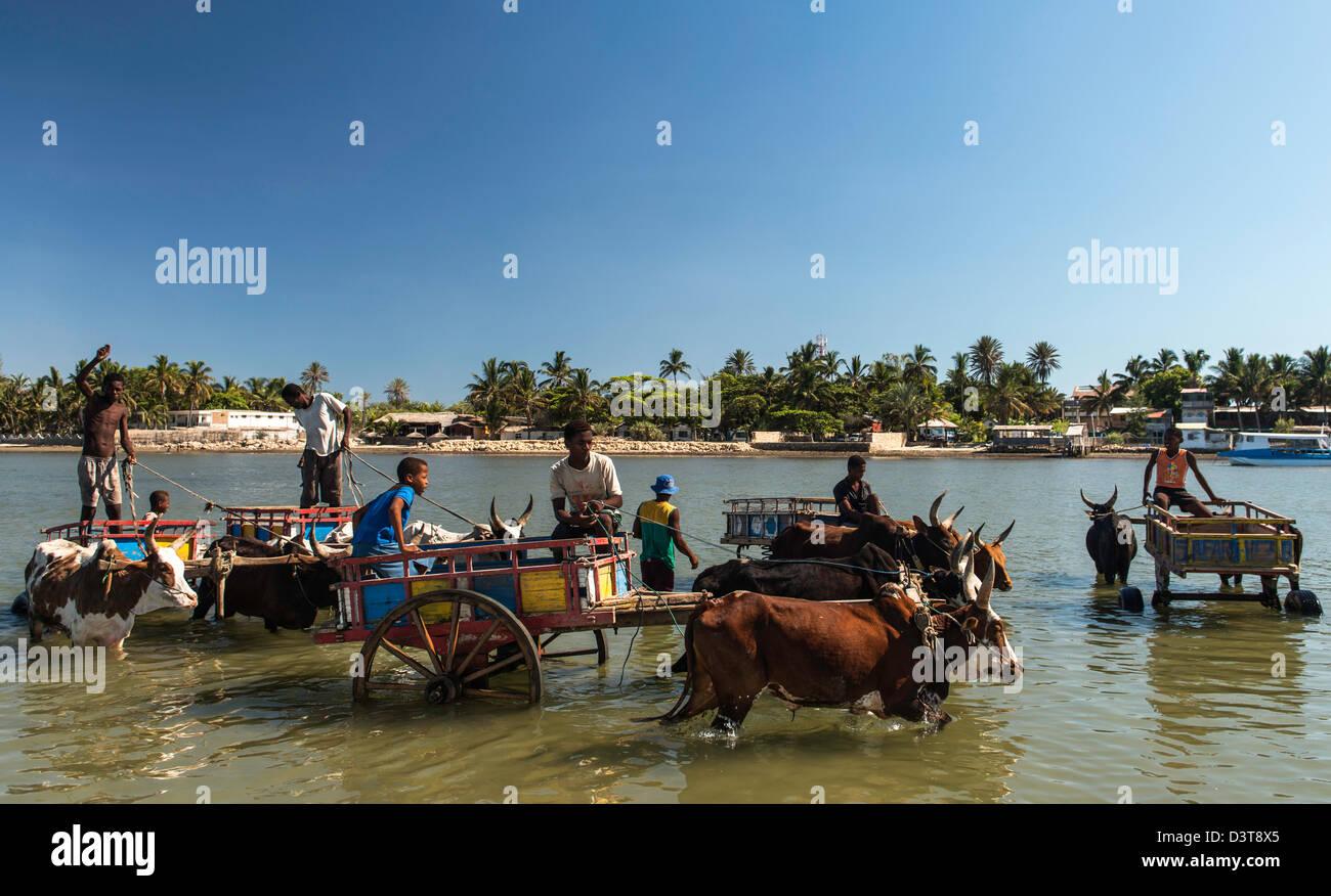Ochsenkarren im Wasser Toliara Süd-West-Madagaskar Stockbild