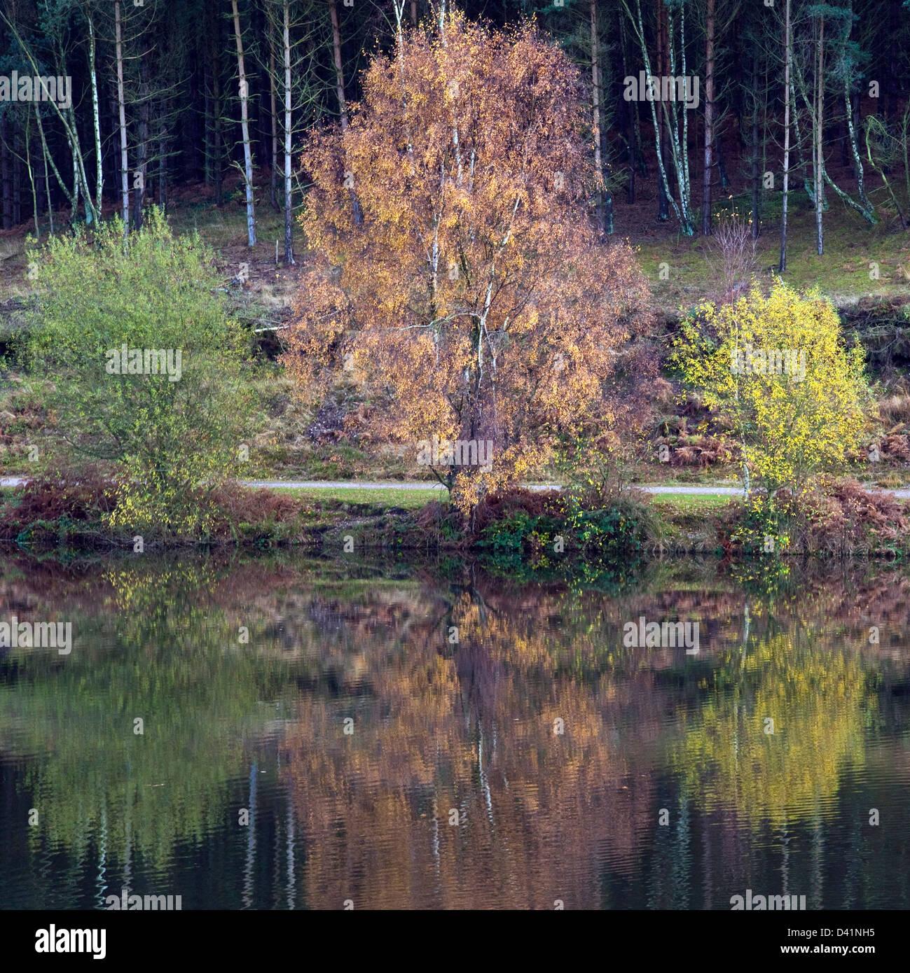 Atemberaubende herbstliche Farbtöne Tönungen und Farben spiegeln sich in Fair Oak Pools auf Cannock Chase Stockbild