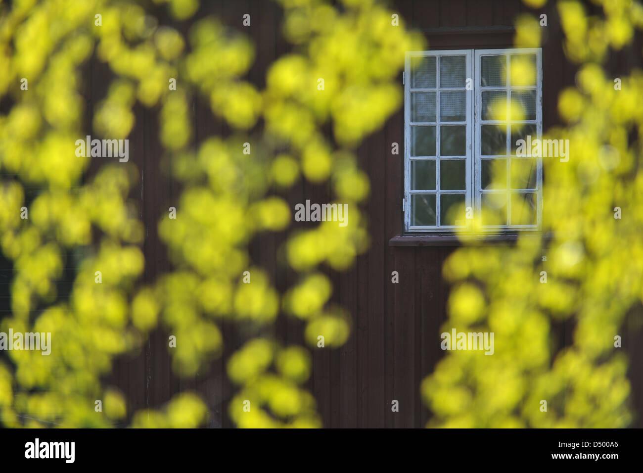 Bauernhof hinter sonnenbeschienenen verlässt, Munkfors, Värmland, Schweden, Europa Stockbild