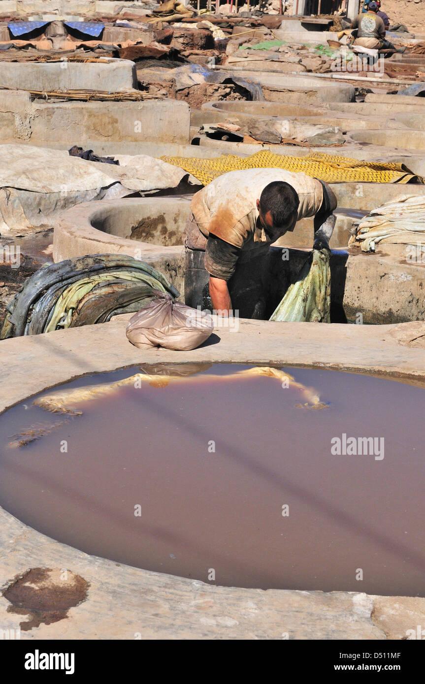 Mann, die tendenziell der Kuh versteckt einweichen in Wasser in die Tanks in den Gerbereien in Marrakesch, Marokko Stockbild