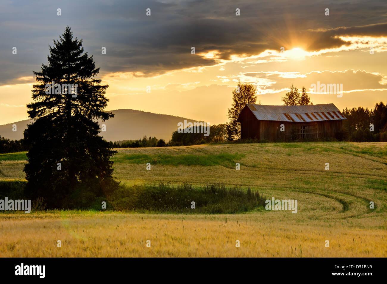 Sonnenuntergang über Ackerland, Bollnäs, Hälsingland, Schweden, Europa Stockbild