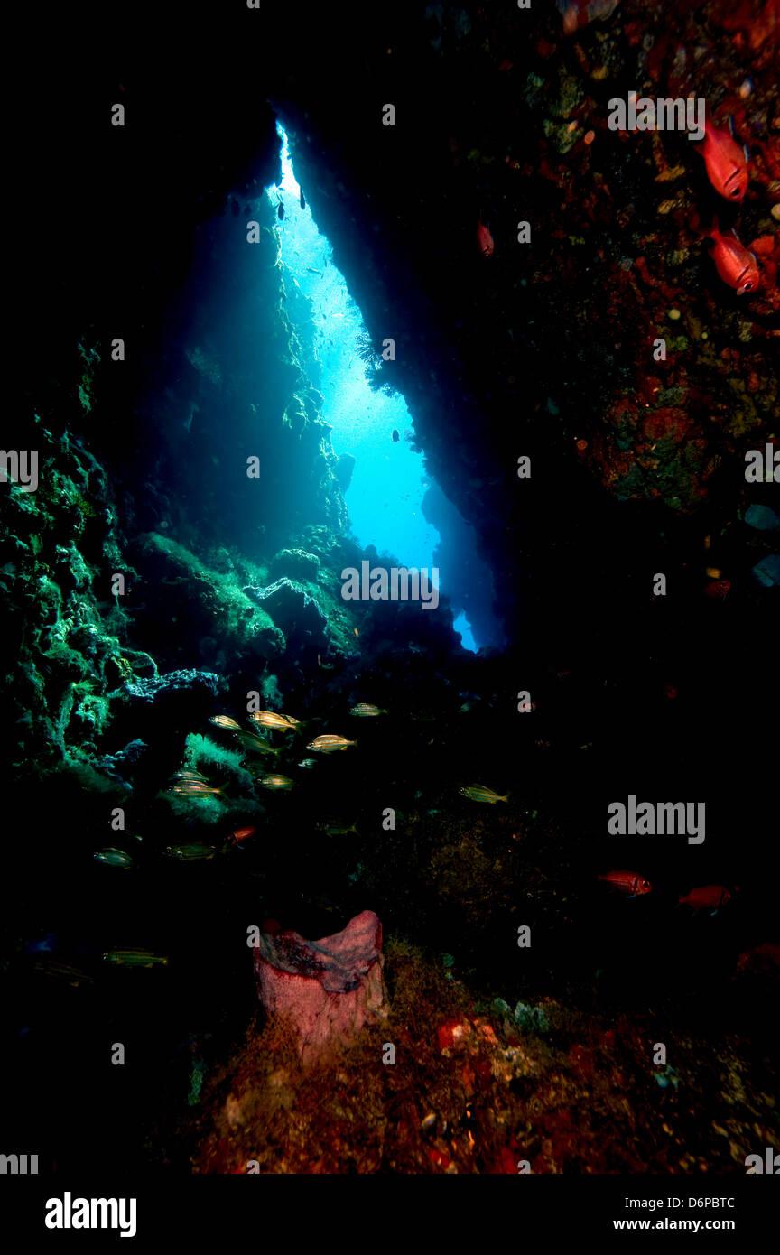 Durch Schwimmen, Dominica, West Indies, Karibik, Mittelamerika Stockbild
