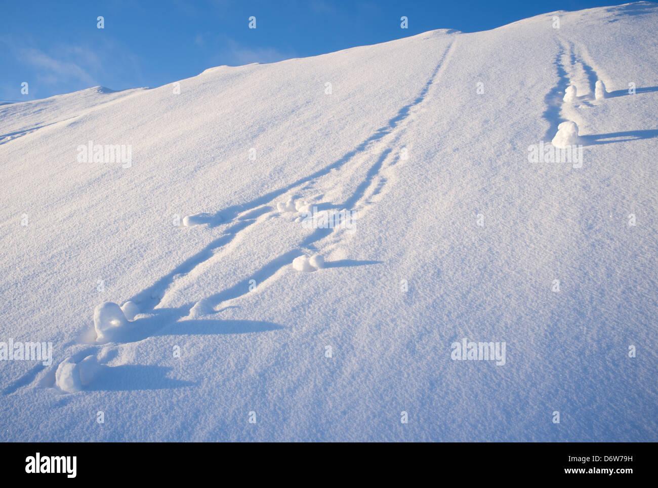 Schneebälle rollten am steilen Hügel, Finnland Stockbild