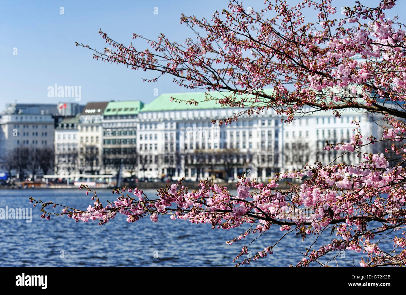 tree in four seasons spring stockfotos tree in four seasons spring bilder alamy. Black Bedroom Furniture Sets. Home Design Ideas