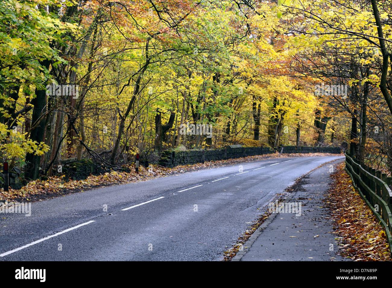Eine leere Landstraße im Herbst, Schottland, UK Stockbild