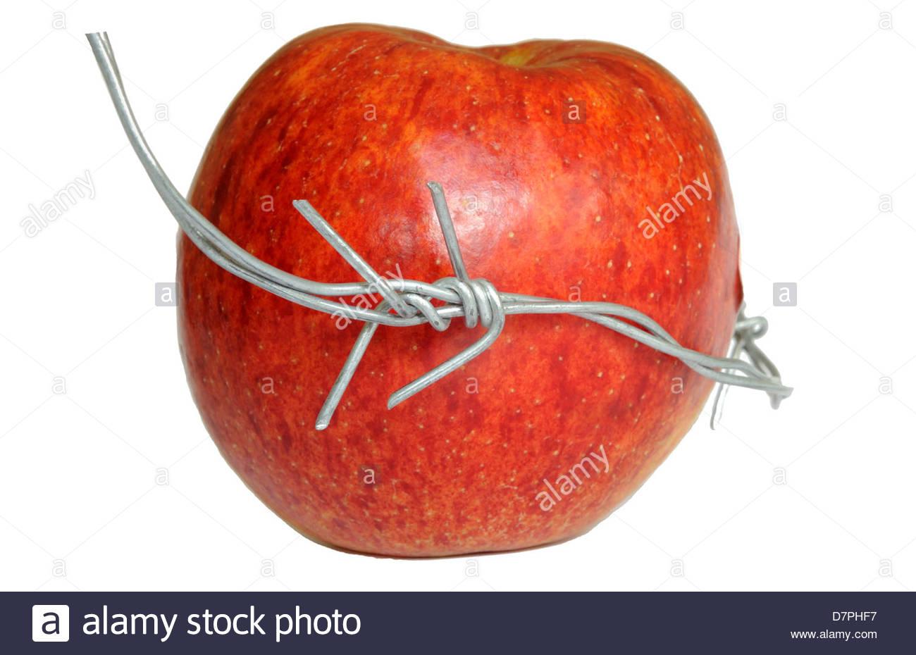 Apple und Stacheldraht - verbotene Frucht, Ernährungssicherheit, schneidet IP auf Hybrid. Stockbild