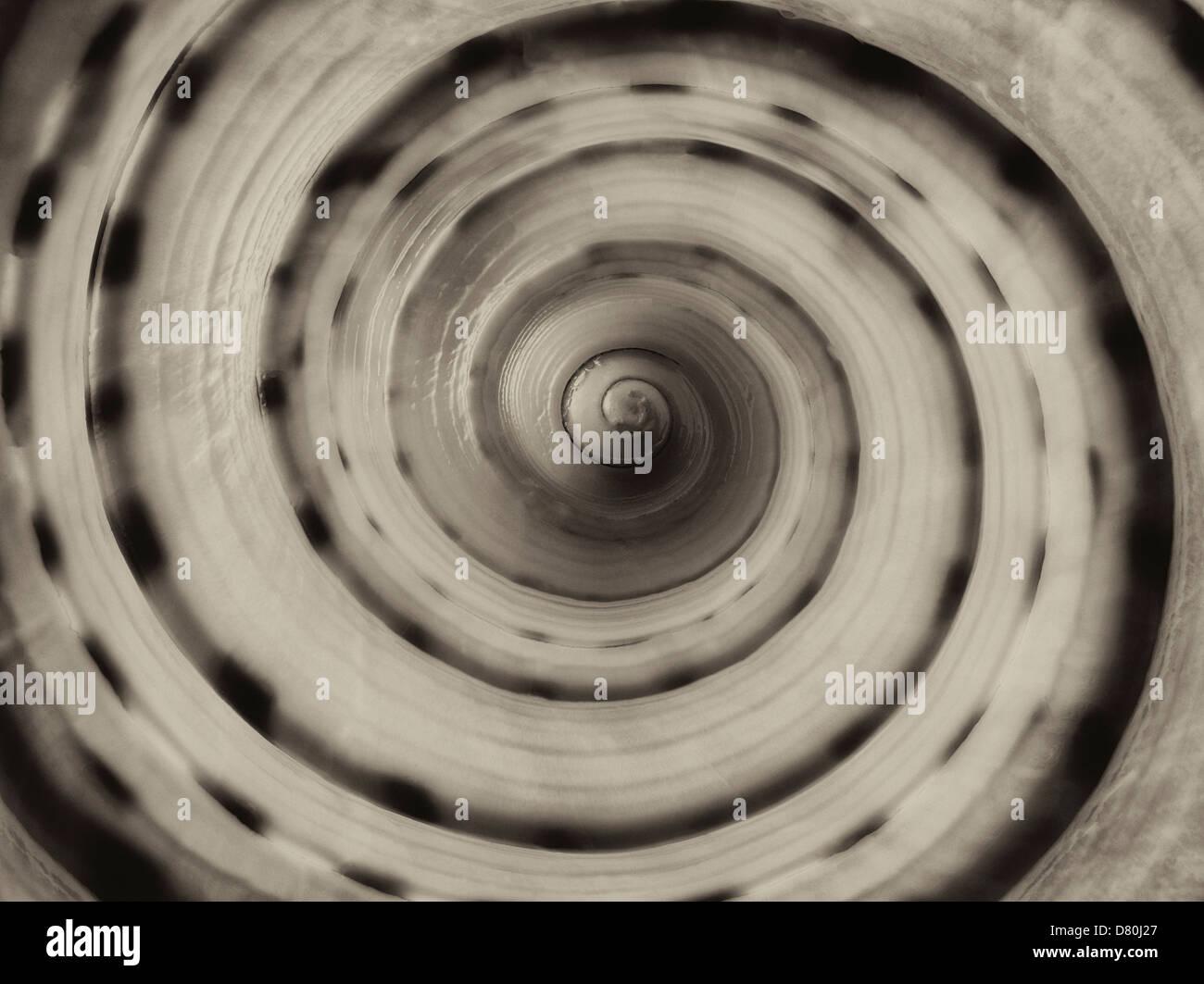 Extreme Nahaufnahme von großen entdeckt Tun Muschel Stockbild