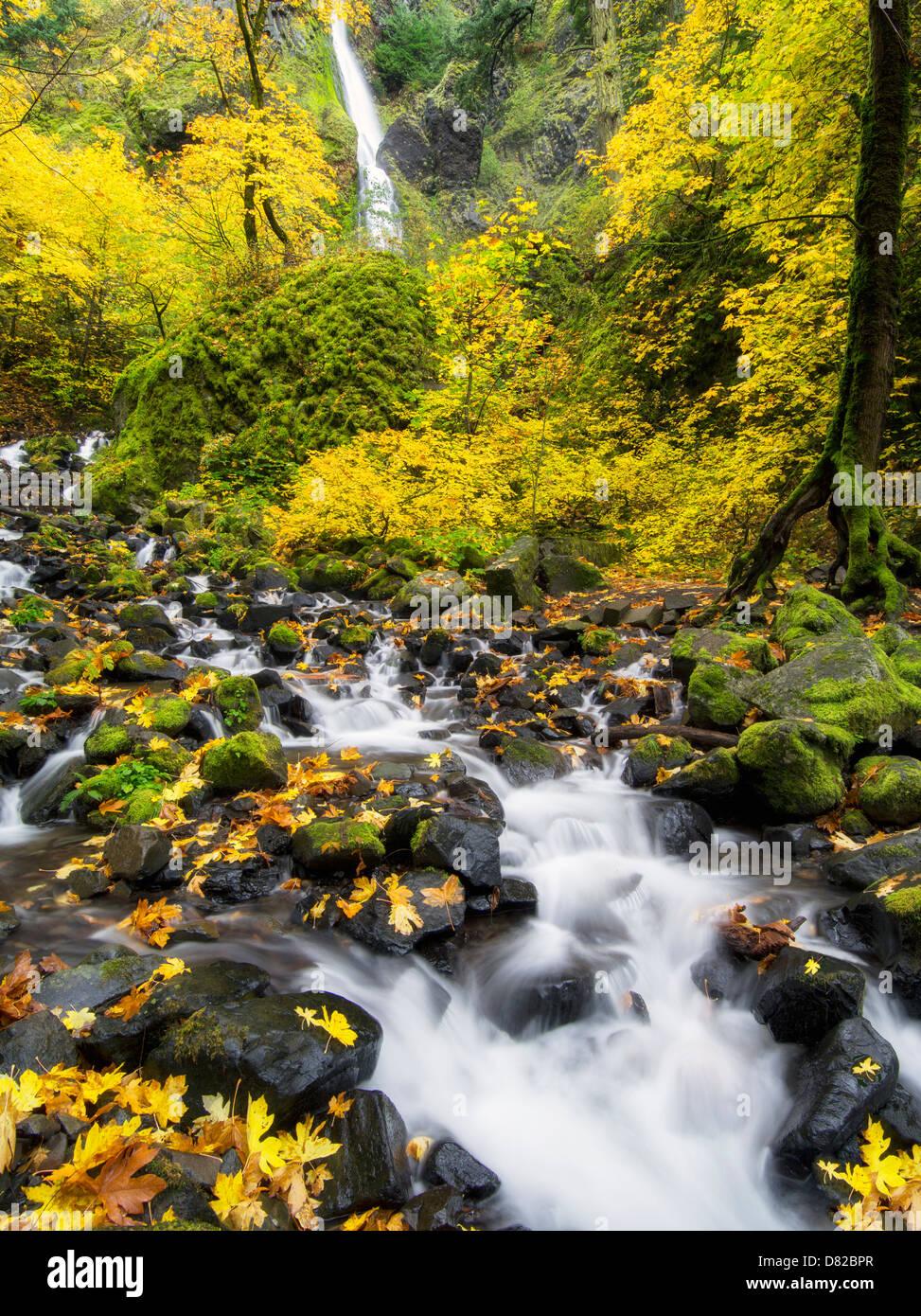 Hunger-Creek und Wasserfälle mit Herbstfarben. Columbia River Gorge National Scenic Bereich, Oregon Stockbild