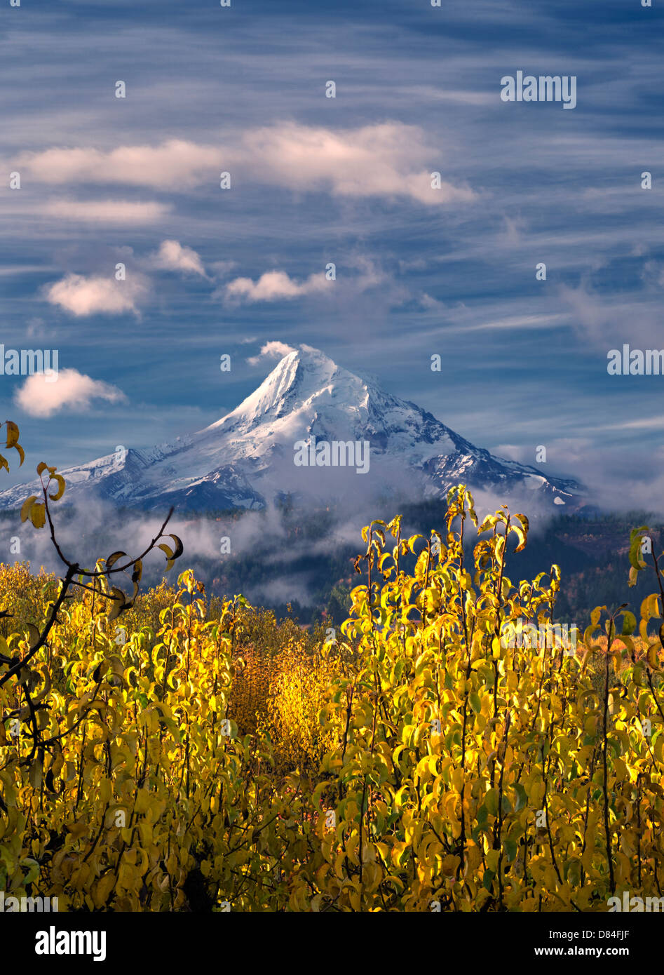 Birnengarten in Herbstfarben und Mt. Hood. Hood River Valley, Oregon Stockbild