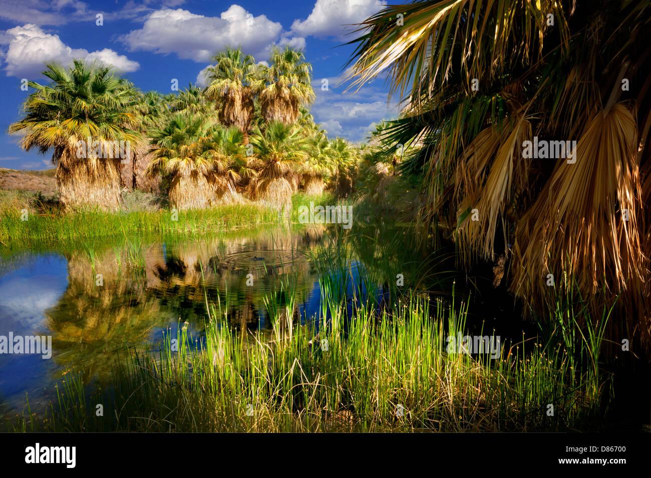 McCallum Teich. Coachella Valley zu bewahren. California Stockbild