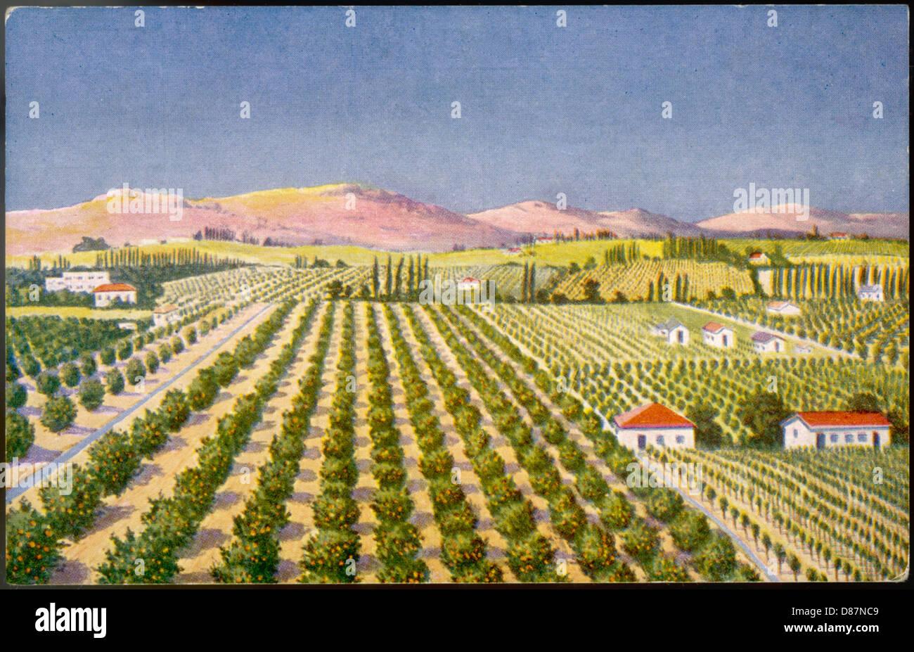 Israelische Orange Grove 30er Jahre Stockbild