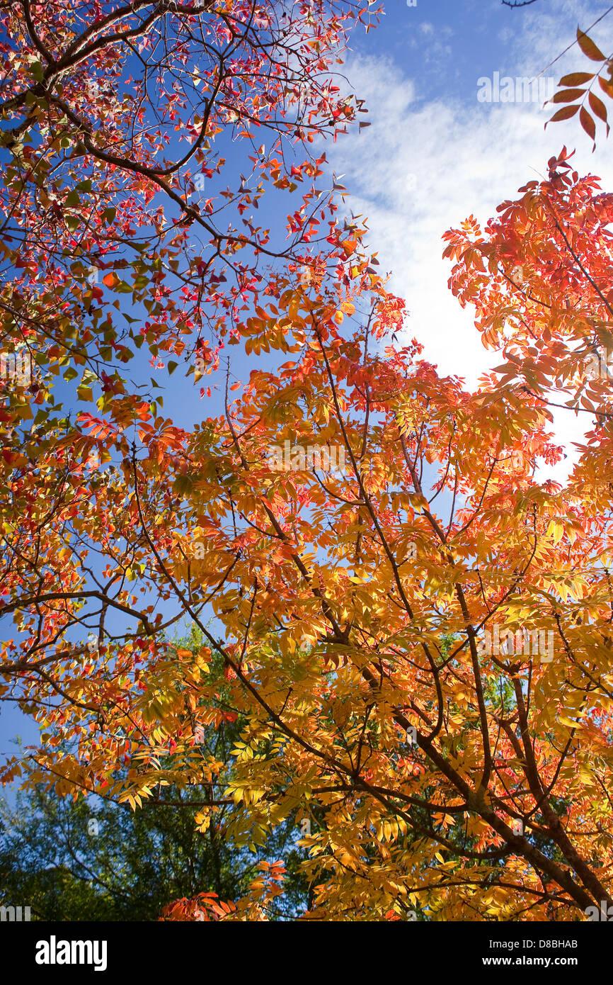 Bunten Blätter im Herbst vor einem blauen Himmel. Stockbild