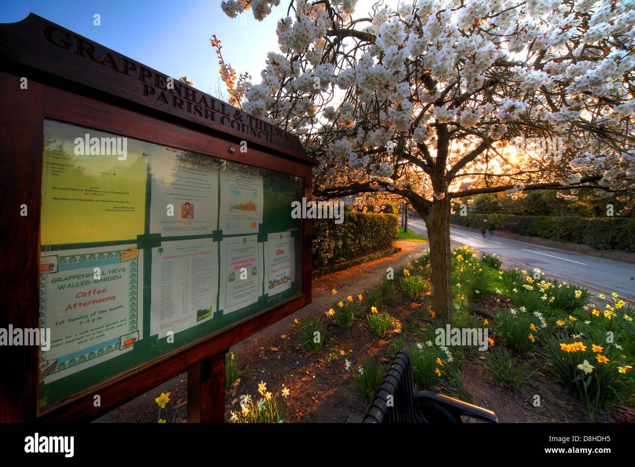 Dieses Stockfoto: Frühlingsabend in der breiten Gasse, Kirschblüte, Gemeinde Aushang,, Grappenhall, Warrington, Cheshire, England, UK, WA4 3ER - D8HDH5