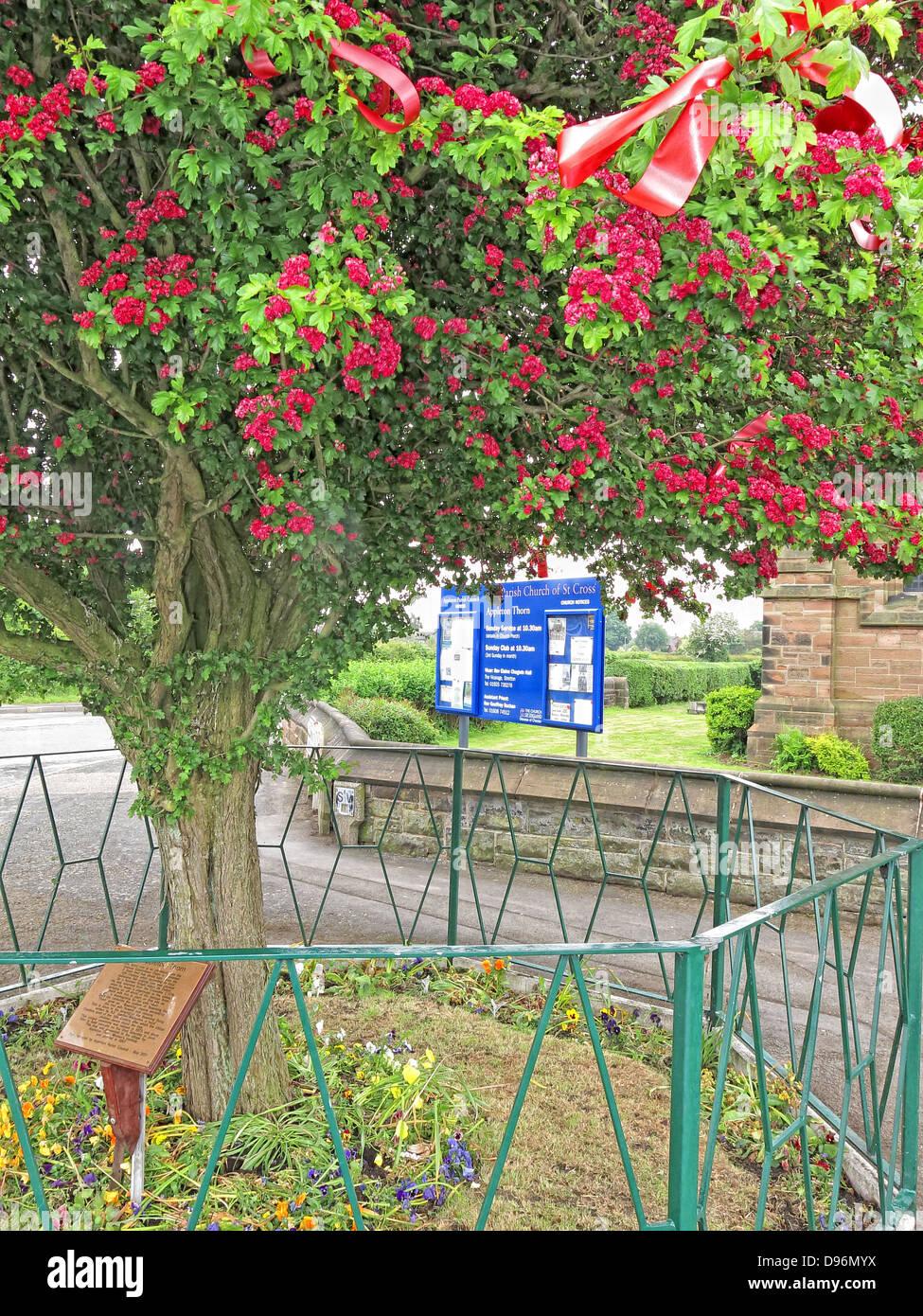 Laden Sie dieses Alamy Stockfoto Die berühmten Dornenbaum Appleton Thorn Village, gekleidet in Warrington, England für die jährliche Juni Bawming der Dorn - D96MYX