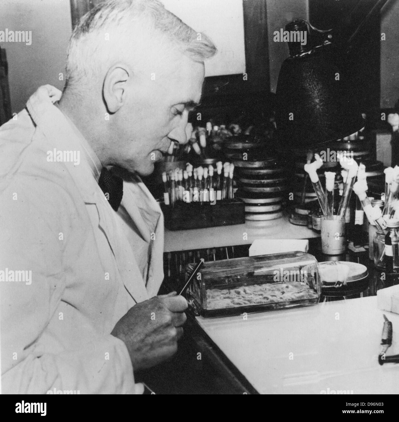 Schottischer Bakteriologe Alexander Fleming (1881-1955). Entdeckte Penicillin 1928. Foto Stockbild
