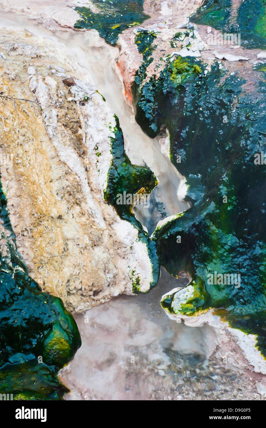 Hot Stream Detail an Orakei Korako Thermal Park, The Hidden Valley, Nordinsel, Neuseeland Stockbild