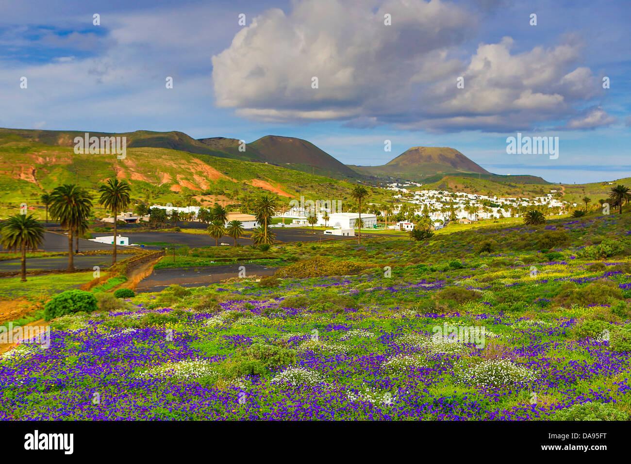 Spanien, Europa, Kanarische Inseln, Haria, Lanzarote, Mague, bunt, Blumen, Insel, Landschaft, palm-Baum, touristische, Stockfoto