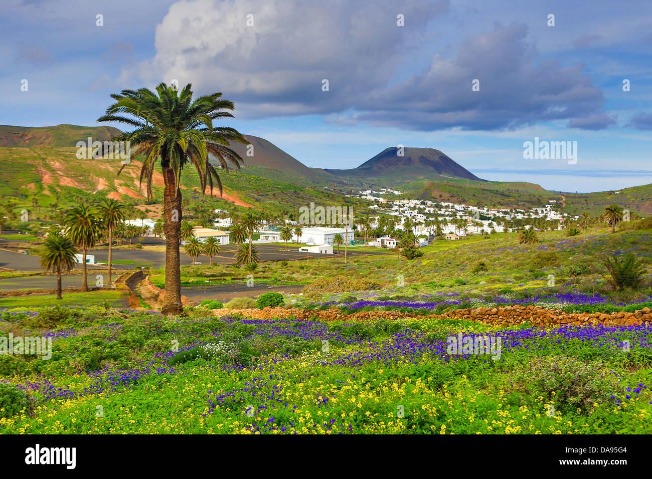 Spanien, Europa, Kanarische Inseln, Haria, Lanzarote, Mague, Dorf, Landwirtschaft, bunt, Blumen, Insel, Landschaft, Stockbild