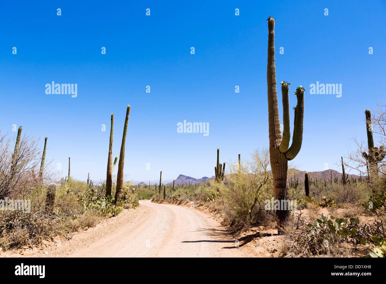 Straße durch Saguaro National Park West, Tucson, Arizona, USA Stockbild