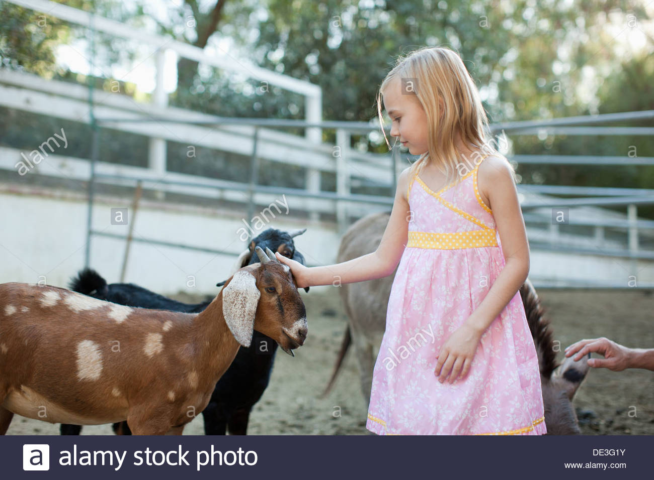 Mädchen Petting Ziege Stockbild