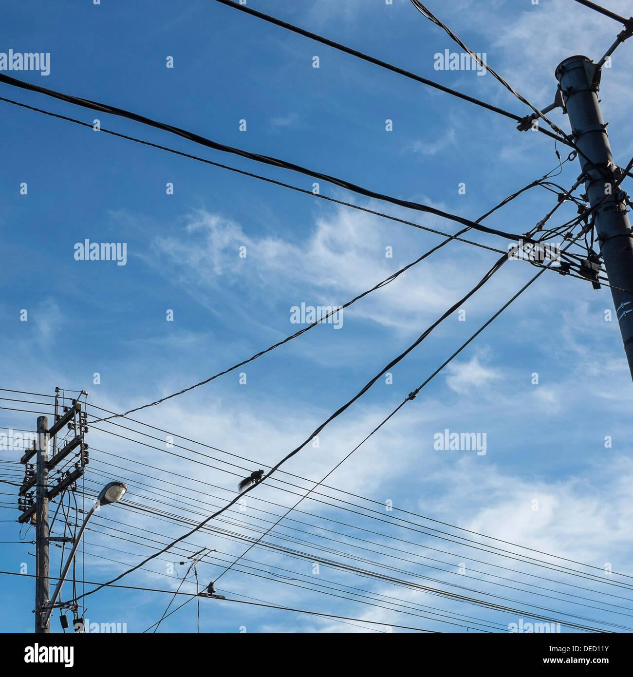 Kleine schwarze Eichhörnchen überquert Straße auf elektrische Kabel - Queen Street West, Toronto, Stockbild